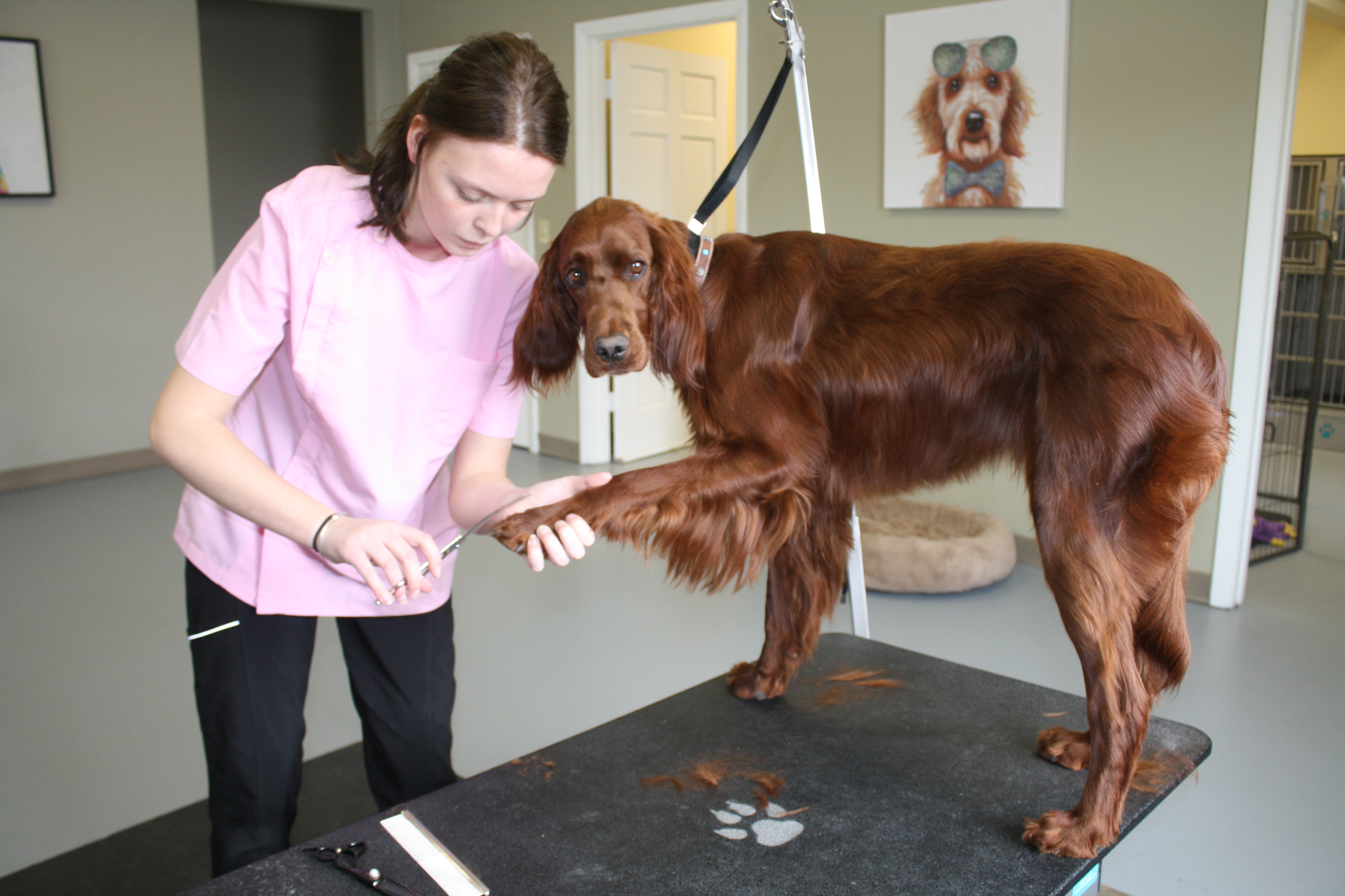 New Dog Grooming Business In Presque Isle Welcomes Furry Friends And Owners The County