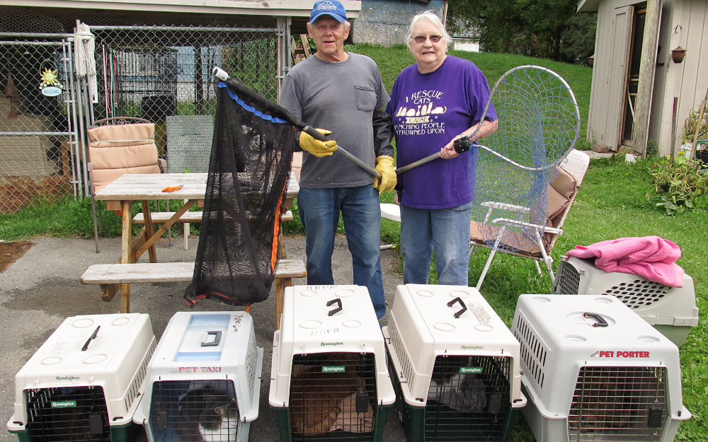 Volunteer shortage suspends adoptions at local pet rescue - The County